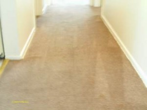 After Hot Water Extraction Carpet Cleaning